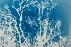 Impressions of Nature III, 2019, 60 x 80 cm